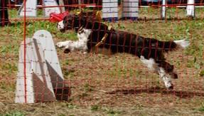 tierheimfestkulmbach2010