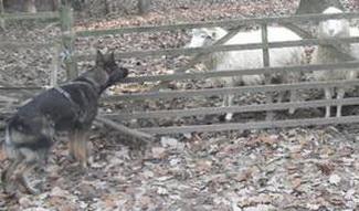 hundshaupten17_c0f1a16760neu