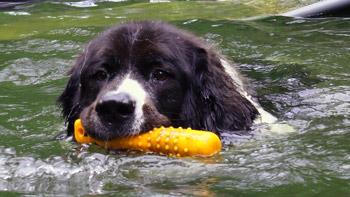 Tag-des-Hundes-(1)