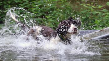 Tag-des-Hundes-(2)