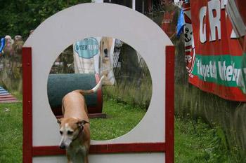 Programm-Tag-des-Hundes